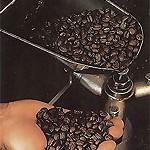 Основные сорта несмешанного кофе