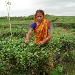 Индийский чай теряет позиции