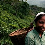 Чай снижает риск развития инсульта на 20%