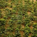 Колумбийские плантации кофе могут стать наследием ЮНЕСКО