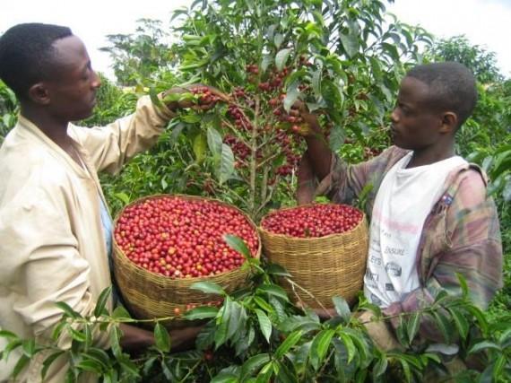 Традиции приготовления кофе. Эфиопия