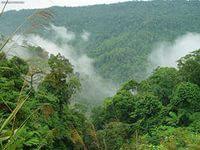 ураган уничтожил кофейные плантации