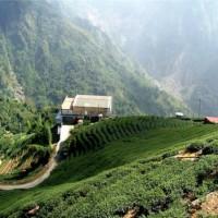 Стали известны цифры производства кофе в китайской провинции Юньнань к 2020 году