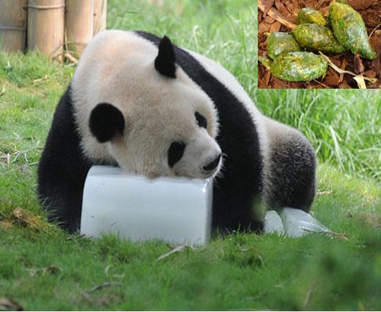 Чай из экскрементов панды
