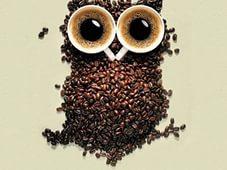 В Японии модно пить кофе вместе с совами