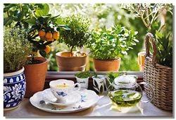 Травяной чай для красоты и стройности