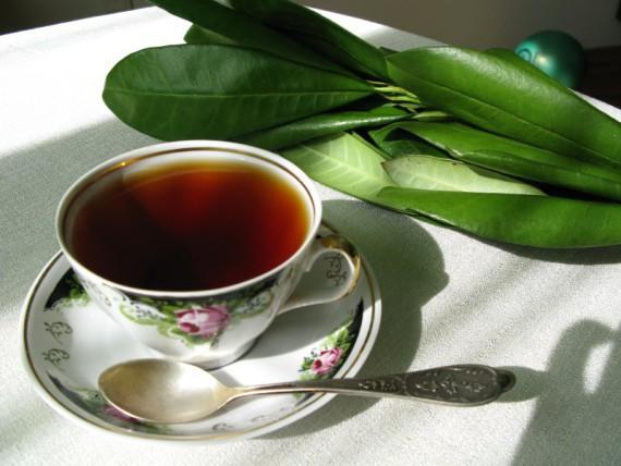 Чай из кофейных листьев