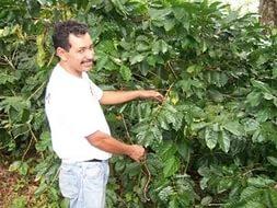 В Сальвадоре организовали кофейный маршрут