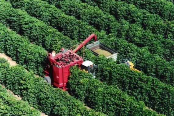 Для фермеров приготовлен перечень кофейных деревьев